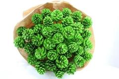 Denneappel Groen